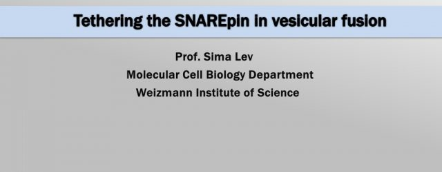 Tethering the SNAREpin in vesicular fusion slide 1